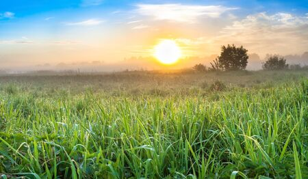 beautiful summer landscape panorama with sunrise and meadow. panoramic view of spring field and sunset
