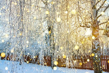 beautiful rural winter landscape with trees covered with snow. sun shines through trees Stock fotó