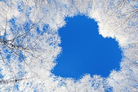 winter forest trees are covered with snow. shape heart of branches tree on blue sky background. beautiful winter landscape with forest and blue sky Stock fotó