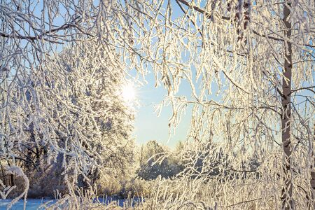 beautiful winter snowy landscape with forest and sun. sun rays shine through trees covered with snow