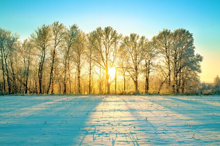 beautiful sunny winter landscape with sunrise, forest and field. wintry scenery sun shines through trees