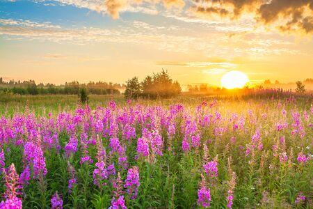 schöne erstaunliche ländliche landschaft mit sonnenaufgang und blühender wiese. lila Blumen blühen auf Frühlingsfeld. Landschaft mit wilden Blumen, die bei Sonnenuntergang blühen
