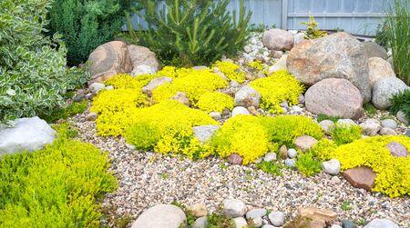 panorama of rockery rock garden. gardening background panoramic view. gardener backyard design element. flowers sedum flowering spring 版權商用圖片