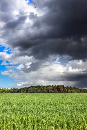 rural landscape view from field. agricultural field with wheat. dark sky with storm clouds and rain. view moody sky