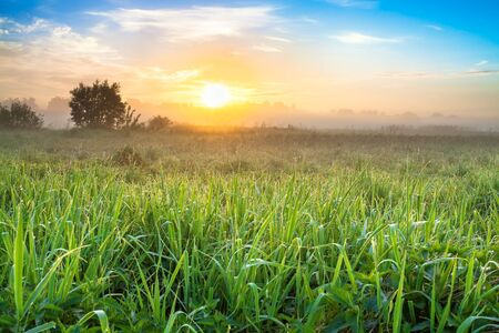 beautiful spring landscape with sunrise and meadow. panoramic view of summer field and sunset
