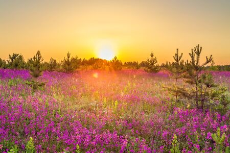 beautiful amazing spring landscape with  flowering purple flowers on meadow and sunrise. wildflowers blooming on summer field. wild scenery with night wonderful