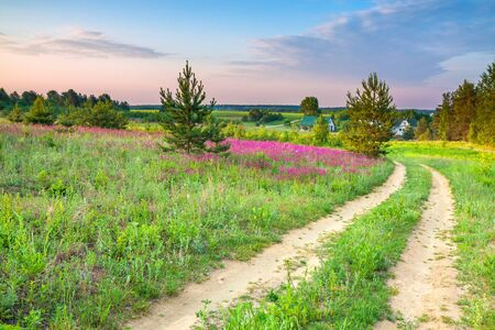 spring amazing landscape with a blossoming meadow, road and farm. summer  wild flowers on field.  purple flowers on meadow and  sunset.  flowering field wildflowers and farmhouse on sunrise. 版權商用圖片