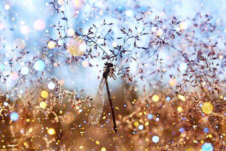 dragonfly sits on a fairy tale spring meadow  版權商用圖片