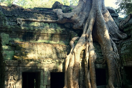 invading: Tree invading Ta Prom temple in Angkor Stock Photo