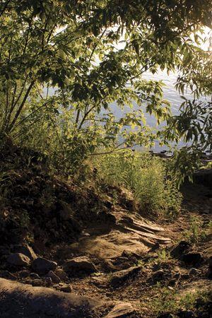 Bos pad dat leidt tot een waterlichaam Stockfoto