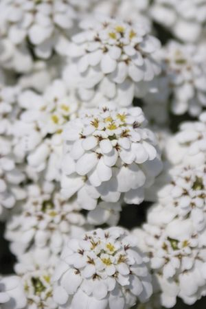 Extreme close up with shallow depth of field, macro style, of white flower Banco de Imagens