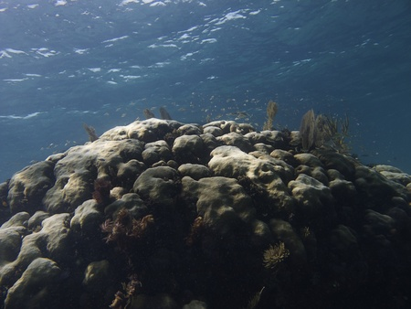 brilliant   undersea: Huge coral hill with fish living on top Stock Photo