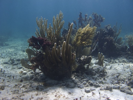 brilliant   undersea: Little mount of coral in the middle of the sea