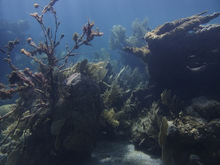 brilliant   undersea: Large view of a coral reef Stock Photo