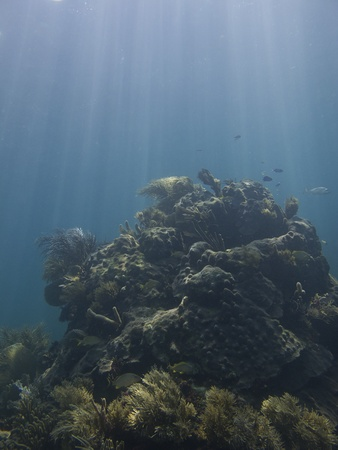 brilliant   undersea: Coral reef under sun rays, home to many species of fish