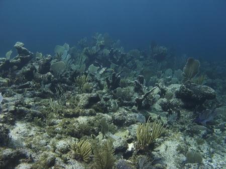 brilliant   undersea: Landscape view of a coral reef near mexico