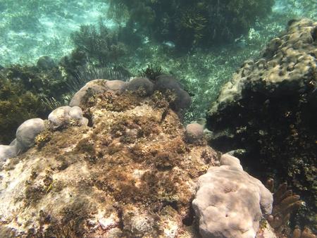 brilliant   undersea: Small coral cliff home to many fish