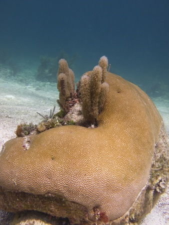 brilliant   undersea: Coral rock at the bottom of the ocean Stock Photo