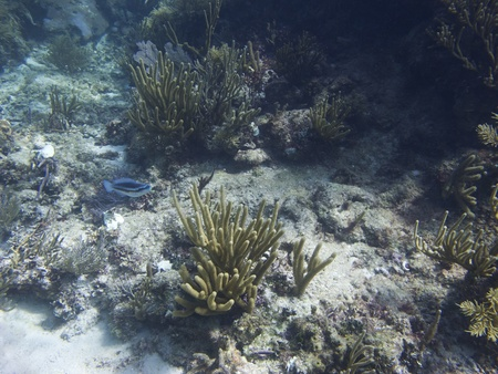 brilliant   undersea: Coral reef home to many species of fish