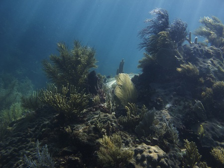 brilliant   undersea: Coral reef under sun rays, great refuge for some fish