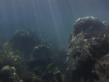 Koraalrif op de bodem van de zee