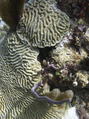 brilliant   undersea: coral with ripple pattern at the bottom of the ocean Stock Photo