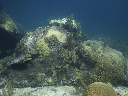 brilliant   undersea: rock covered with coral at the bottom of the ocean