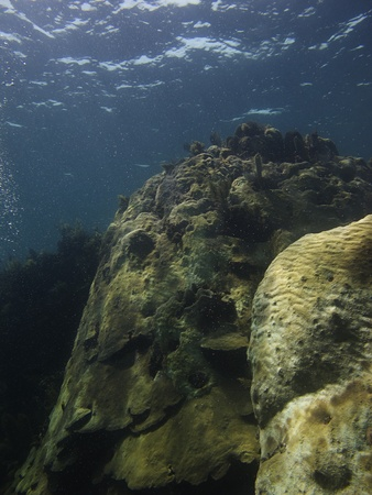 brilliant   undersea: Giant rock with coral forming on top of it Stock Photo