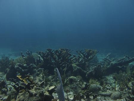 brilliant   undersea: Coral reef at the bottom of the ocean floor