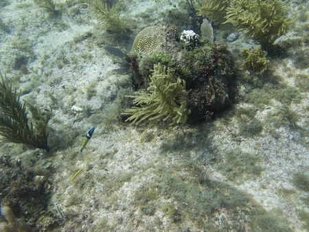 brilliant   undersea: Little fish swimming at the bottom of the sea