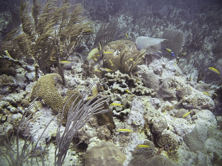 Coral reef full of fish and see life photo