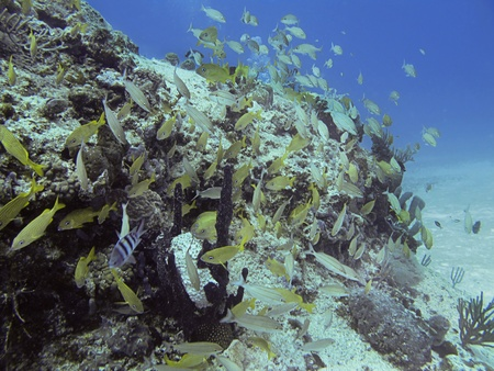 School of mix fish in a coral reef photo