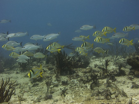 School of fish swimming over a reef Stock Photo - 13443439