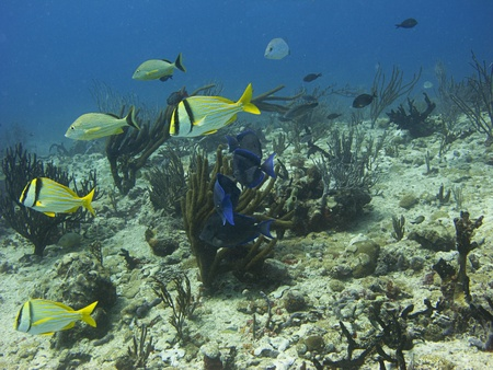 mutliple school of fish swimming over a reef photo