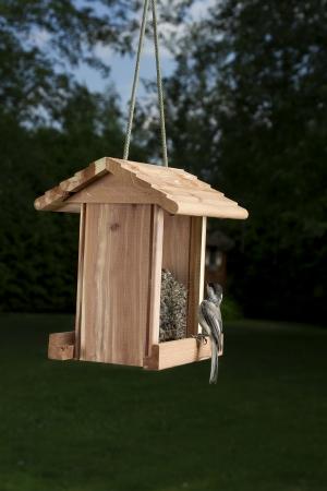 Black-capped Chickadee on a bird feeder looking up Stok Fotoğraf