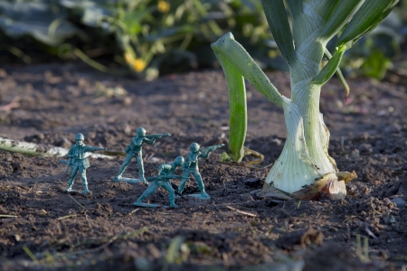 green military miniature: Green army toy soldier attacking an onion in the garden Stock Photo