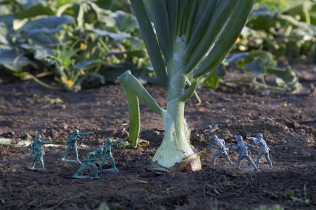 gray and green toy soldier fighting for a onion in a garden photo