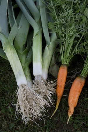 carot: fresh garden carrots and leak on the grass