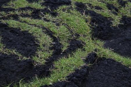 green grass growing on dark black volcanic rock photo