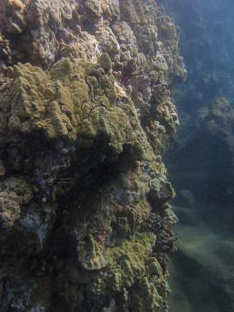 Coral reef wall at the bottom on Pacific ocean on the hawaii shore