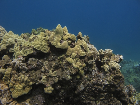 coral reef in the pacific ocean