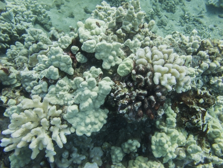 hard coral: Close up of hard coral in the pacific ocean