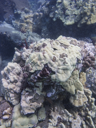 coral reef of the shore or mauii, in the pacific ocean photo