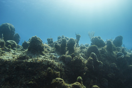pristine coral reef: Wall of coral bathed by sunlight Stock Photo