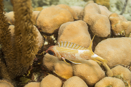 the turks: squirrelfish resting on top of some coral and sponges Stock Photo