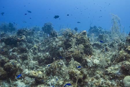pristine coral reef: barriera corallina piena di vita con pesci, coralli e spugne Archivio Fotografico
