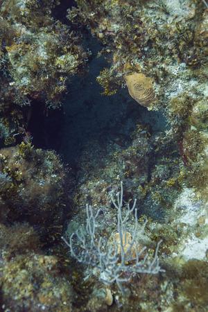 brilliant   undersea: coral reef forming a cavern deep under water