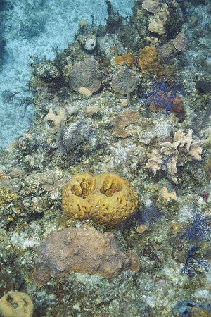 brilliant   undersea: reef covered with soft and hard coral, sponges and algea