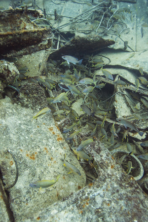 ship wreck: school of fish at the bottom of a ship wreck