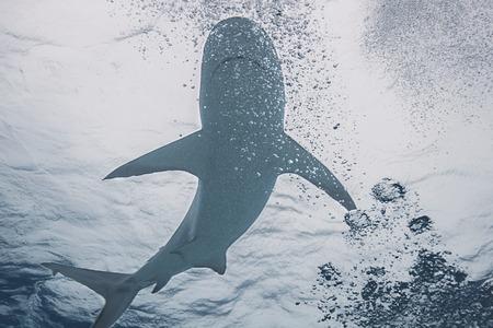 fishy: Shark swimming through divers air bubble